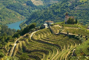 Terraced landscape of the winelands in Portugal