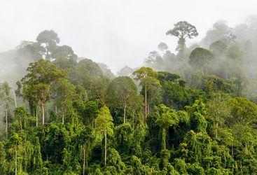 Foggy Rainforest