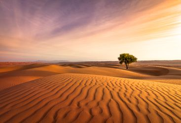 sunset in the Omani desert