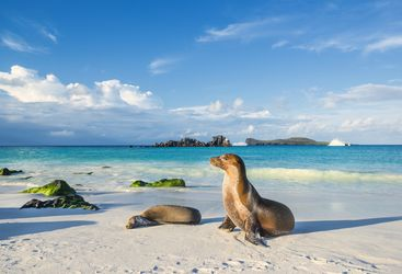 Sea lion on the beach, Galapagos