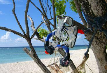 Goggles in tree at Soneva Fushi