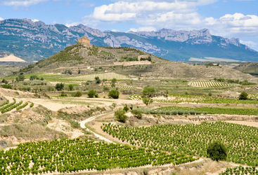 Vineyards and castle in Rioja
