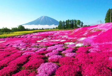 Flowers in field in Hokkaido