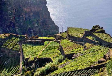 Hillside in Madeira
