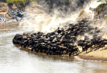 Masai Mara Great Migration