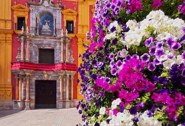 Malaga flowers