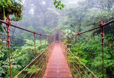 Bridge across cloud forests