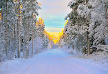 Swedish Lapland forest