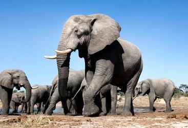 Hwange elephant herd