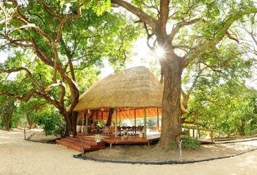 Hut under mahogany trees