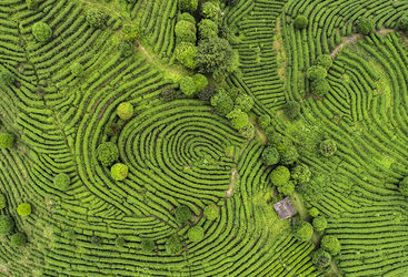 Aerial shot of Indian Darjeeling tea