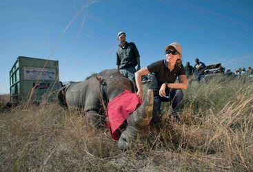 Vet with rhino