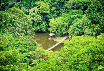 Hanging bridge Sarawak