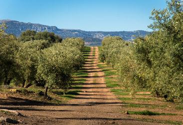 Andalusia vineyard