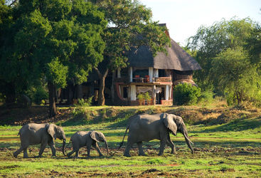 elephant walking house