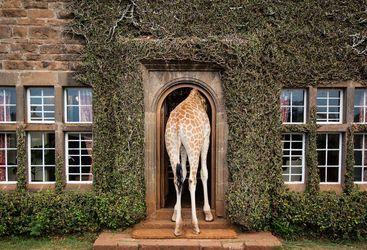 Giraffe in the doorway