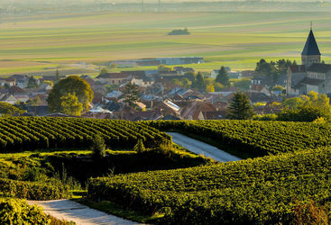 Champagne vineyards in Marne department