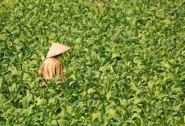 Laos plantations