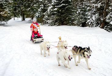 Girls sledding with husky team