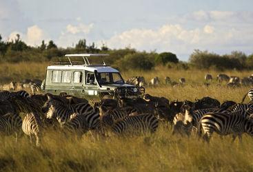 Vehicle among a group of zebras