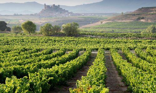 Hazy Vines in Front of San Vincente de la Sonsierra