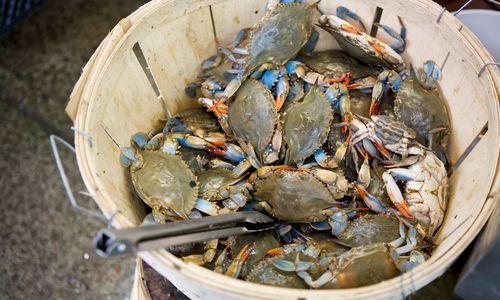 Crabs at a Vancouver Market