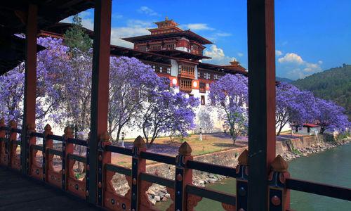 Jarcanda trees at dzong