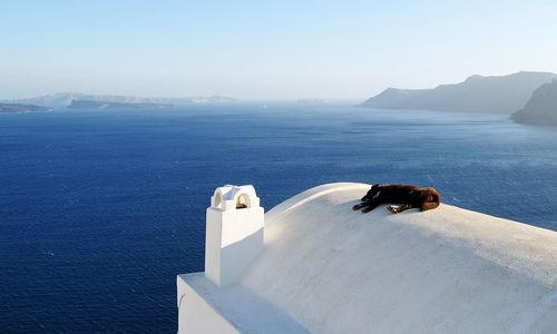 Cat sleeping on roof