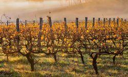 Vineyards near the Margaret River