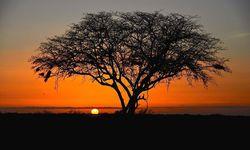 Sunset behind tree in Kenya