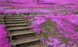 Pink Flower Staircase