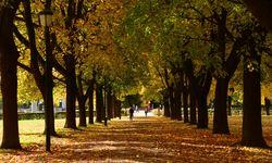 Vigeland Park in Autumn