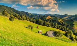 Meadows, Translyvania
