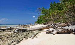 Fallen log on the beach