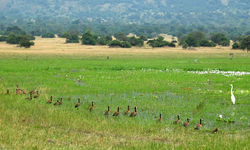 Wading birds and duck