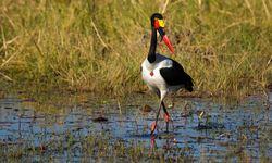 Black and White Bird Colourful Beak