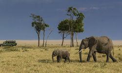 Selous Elephants