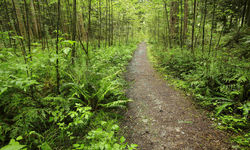 Forest Trails in British Columbia