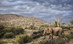 Elephant in Northern Tanzania