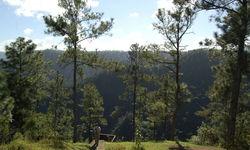 Belize Mountain Pine Ridge Forest Resrve