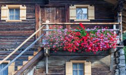 Chalet with flowers