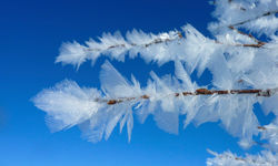 Frosted leaves in Swedish Lapland