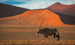 Desert wildlife in Africa