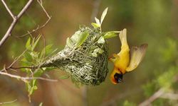 Bird Clinging to Nest