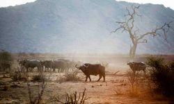 Rhinos in madikwe