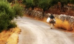 A Dusty Road with a Donkey