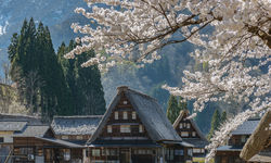Shirakawago Houses