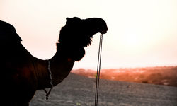 Southern Desert camel silhouette