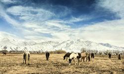 Horses Patagonia, Argentina