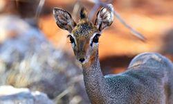 Wildlife of Samburu